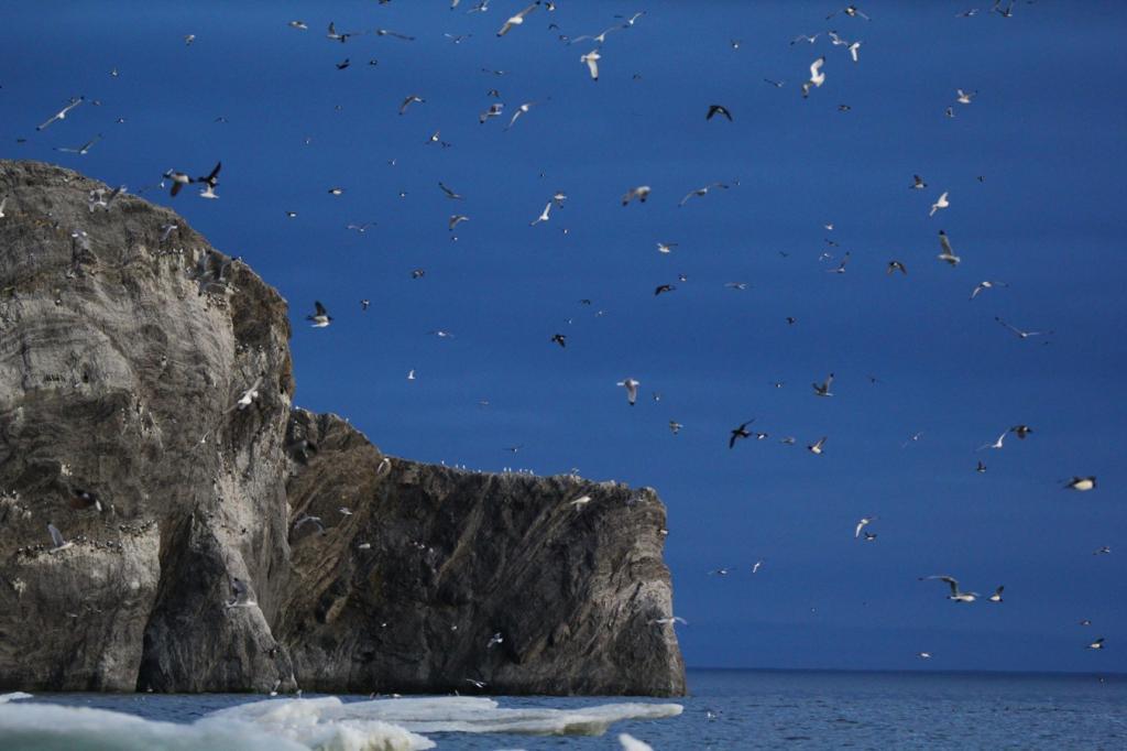 Обитатели морских берегов
