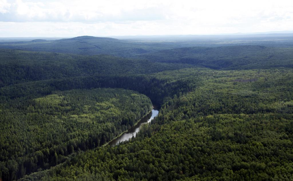 Тайга Свердловской области