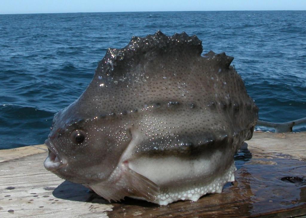 Рыба - воробей