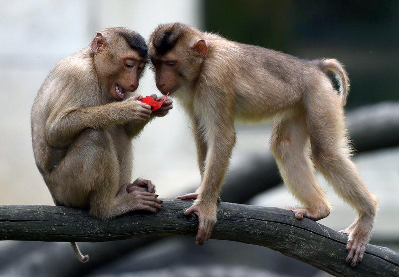обезьяны на ветке