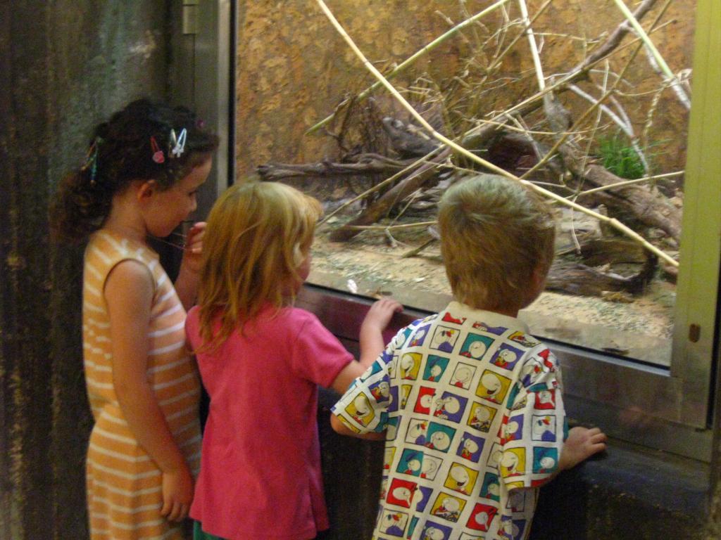 дети в зоопарке