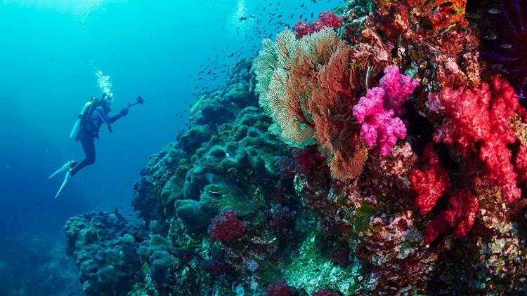 Остров Симиланы Таиланд