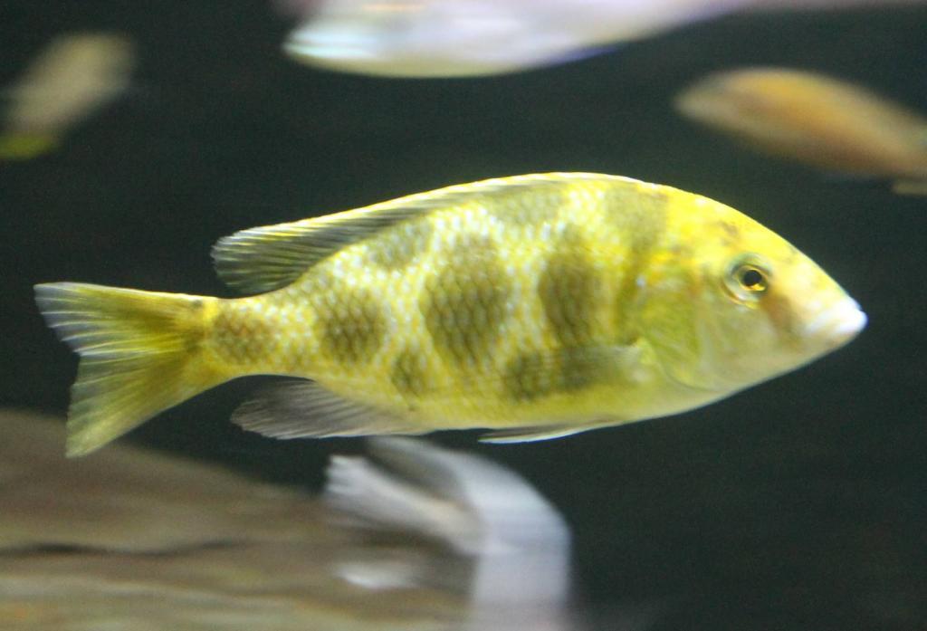 Молодая рыба