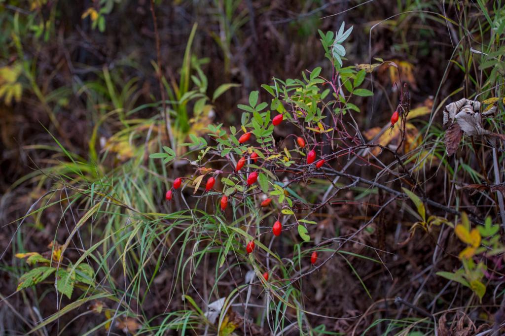 Растительность Приамурья