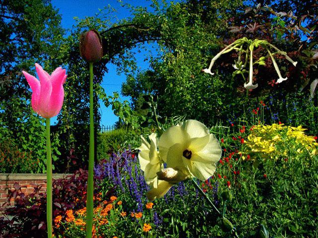 цветы для букета - названия