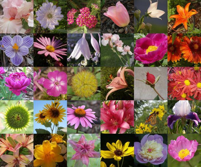 Название цветов для букетов