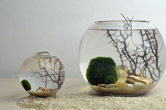 аквариум круглый 5 литров
