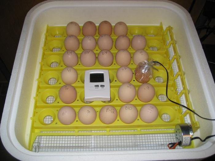 Инкубаторы для яиц в домашних условиях