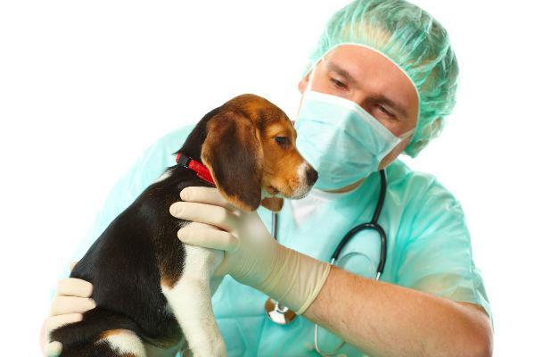 как выполняется чипирование собак