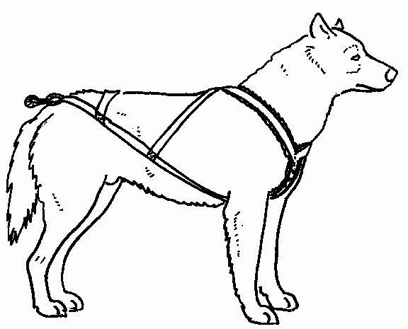 Шлейка для немецкой овчарки своими руками выкройка