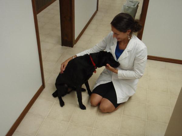 кот и пес ветеринарная клиника хабаровск отзывы