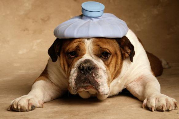 веракол таблетки для собак