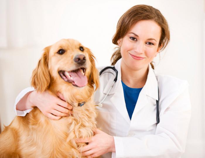 ветеринарная клиника в твери