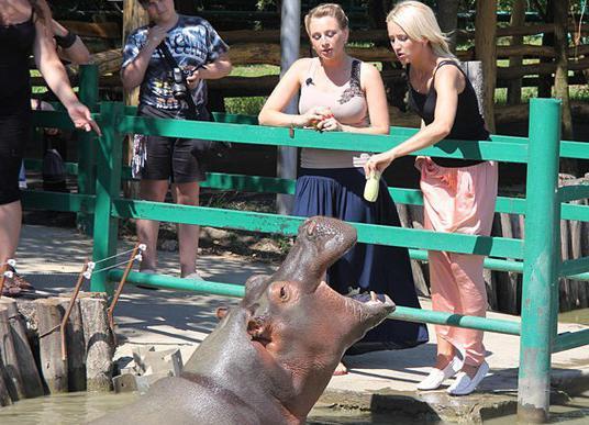Солнечный остров Краснодар зоопарк