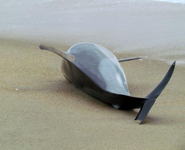почему дельфины выбрасываются на берег