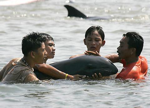 дельфины на берег