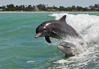 выброс дельфинов на берег