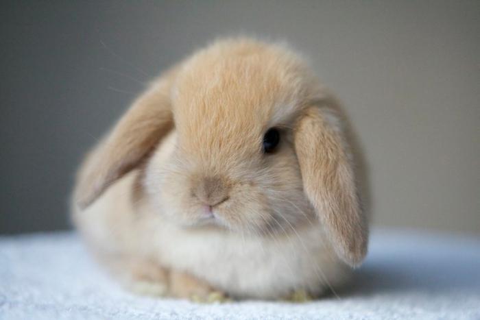 Как кролика декоративного приручить к туалету видео