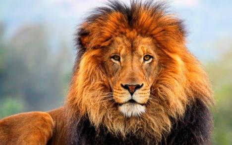 Имя лев происхождение и значение