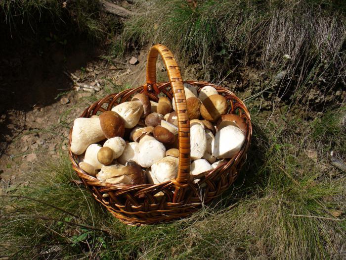 технология выращивания грибов