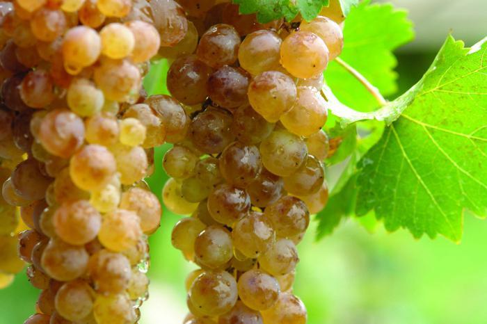 белое грузинское вино название