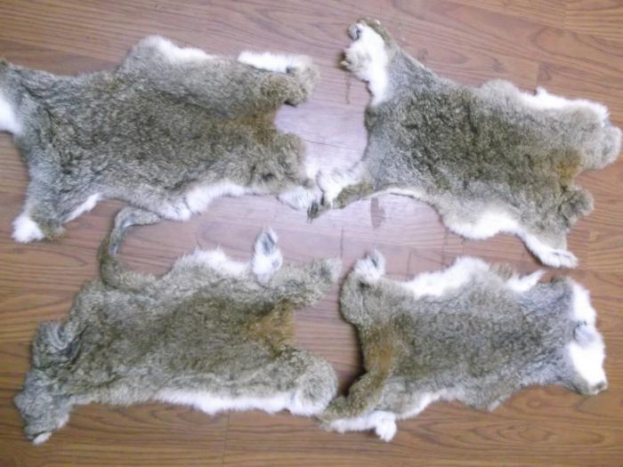 применения как быстро и качественно выделать шкурку кролика приставы