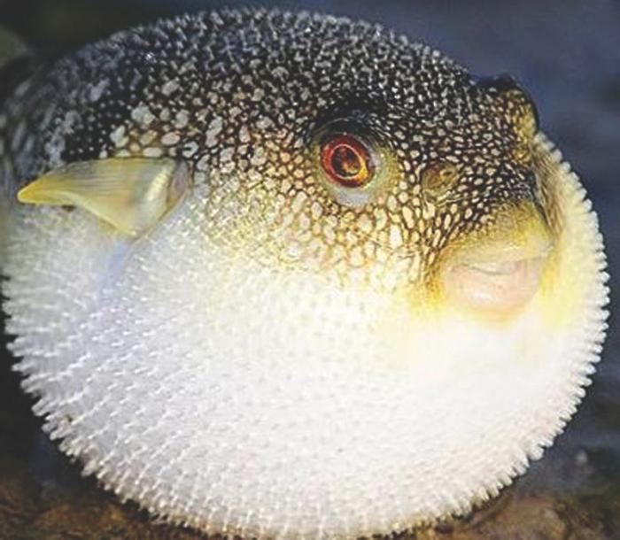Самые ядовитые рыбы в мире