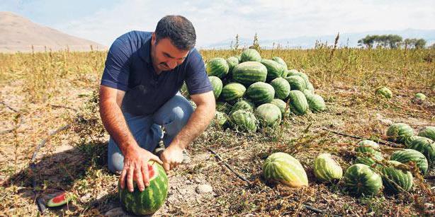 профессия человека который выращивает арбузы