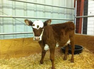 средний надой молока от коровы за сутки