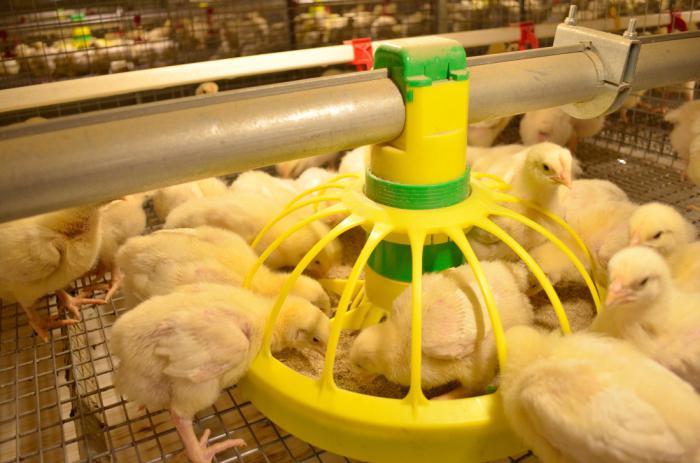 корм для цыплят бройлеров