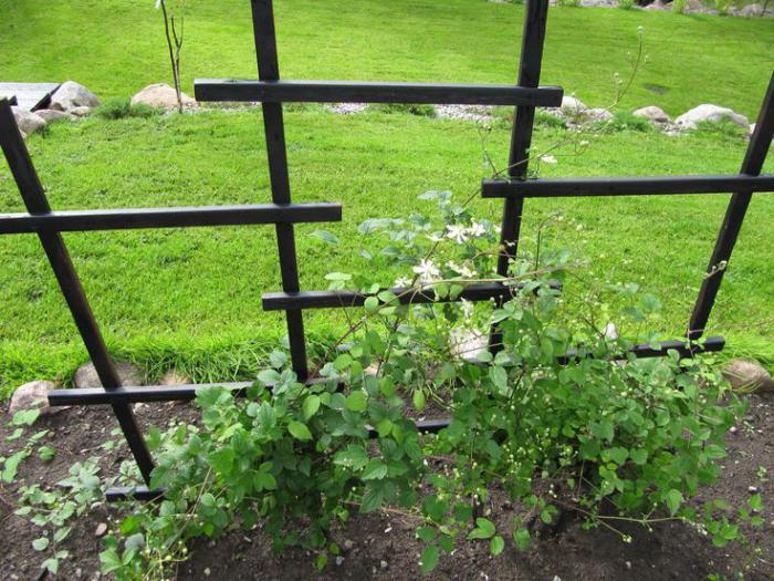 Опора для винограда своими руками на даче фото