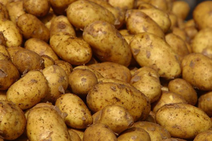 сорт картофеля скарб отзывы