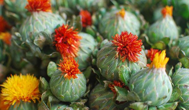 Цветы сафлора