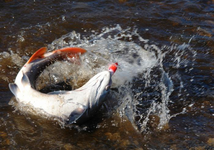 озеро парное хакасия рыбалка