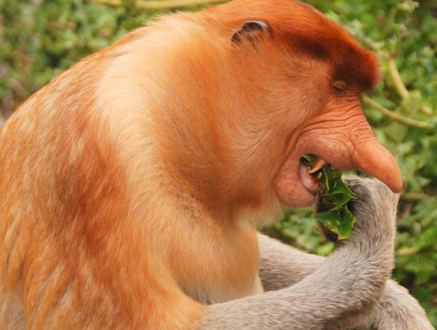обезьяны в природе