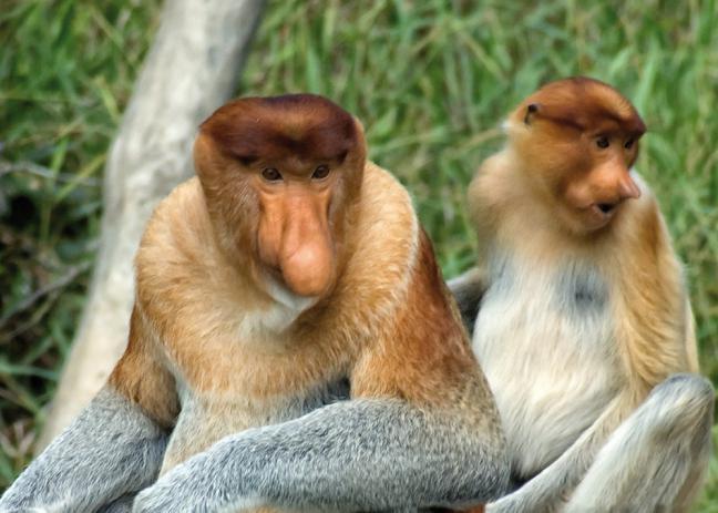 жизнь обезьян