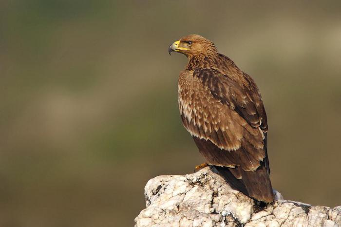 орел могильник название