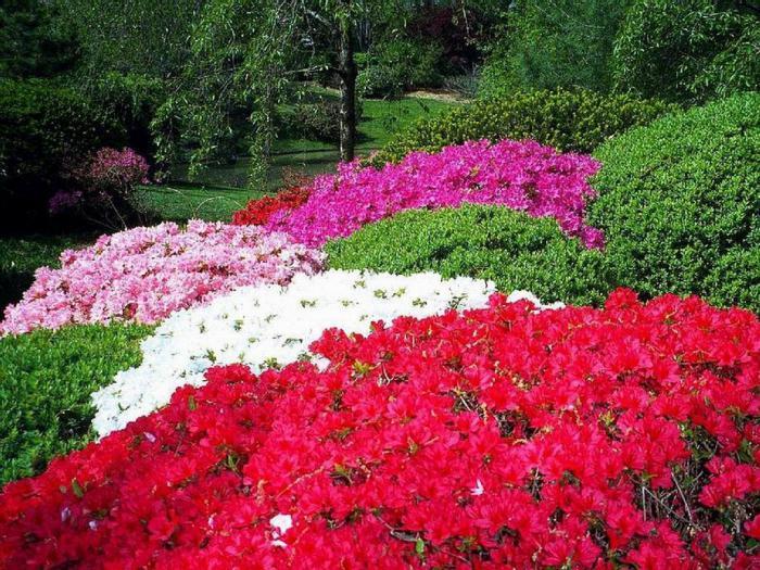 ботанический сад кривой рог как доехать