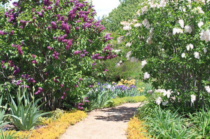 ботанический сад кривой рог стоимость входа