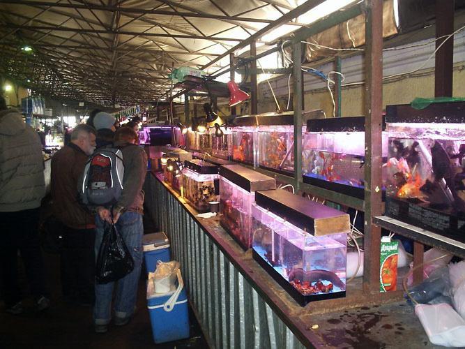 блошиный рынок в санкт петербурге