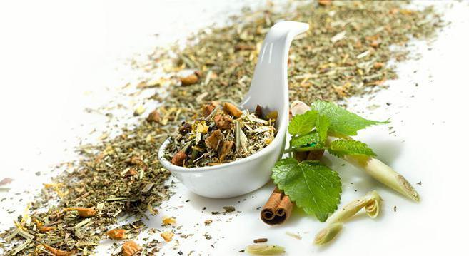 чай с мелиссой польза и вред для мужчин