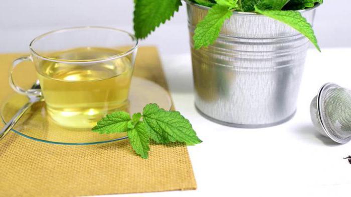 чай из листьев мелиссы польза и вред