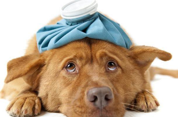 ветеринарные клиники в тюмени круглосуточно