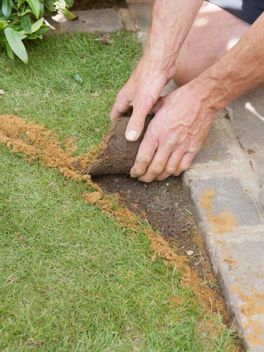 Как сажать газон своими руками 1